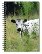Spotted Cow In The Forest Spiral Notebook