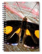 Spotted Grecian Shoemaker Butterfly Spiral Notebook