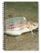 Spotted Hake Spiral Notebook