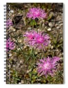 Spotted Knapweed Spiral Notebook