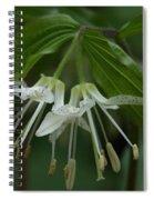 Spotted Mandrin . Disporum Maculatum Spiral Notebook