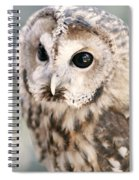 Spotted Owl Spiral Notebook