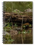Spotted Sandpiper 2 Spiral Notebook