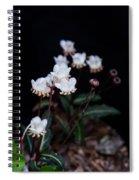Spotted Wintergreen 5 Spiral Notebook
