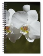 Spray Of Beautiful White Orchids Spiral Notebook
