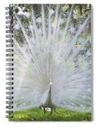 Spreading Peacock Display Spiral Notebook