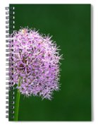 Spring Allium Spiral Notebook