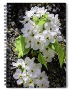 Spring Apple Blossoms Spiral Notebook