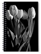 Spring Beauties Bw Spiral Notebook