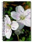 Spring Beauty Wildflowers - Claytonia Virginica Spiral Notebook