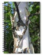 Spring Birch Spiral Notebook