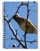 Spring Bird And Berries Spiral Notebook