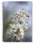 Spring Blooming Bradford Pear Blossoms Spiral Notebook