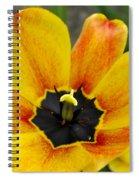 Spring Blossom Sbp Spiral Notebook