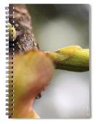 Spring Buds Spiral Notebook