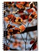 Spring Canopy Spiral Notebook