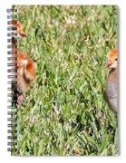 Spring Chicks  Spiral Notebook
