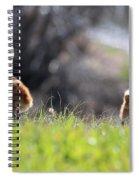 Spring Chicks In The Sunshine Spiral Notebook