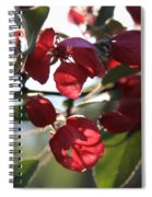 Spring Crabapple Blossom Spiral Notebook