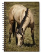 Spring Creek Basin Wild Horse Grazing Spiral Notebook