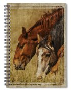 Spring Creek Basin Wild Horses Spiral Notebook