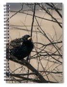 European Starling Spiral Notebook