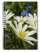 Spring Daisies Spiral Notebook