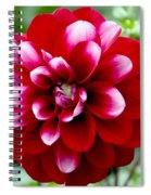 Red Spring Flower Spiral Notebook