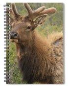 Spring Gaze Spiral Notebook