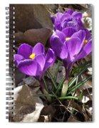 Spring Glory Spiral Notebook