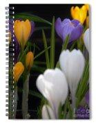 Spring Glow Spiral Notebook
