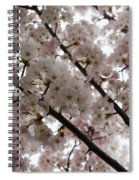 Spring Is Beautiful - A Cloud Of Pastel Pink Blossoms Spiral Notebook