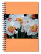 Spring Jonquils Spiral Notebook
