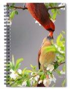 Cardinal Spring Love Spiral Notebook