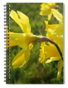 Spring Meadow Field Daffodil Flowers Spiral Notebook