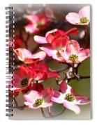 Blossoms In The Spring Spiral Notebook