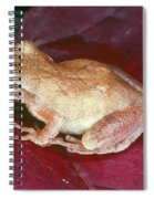 Spring Peeper Spiral Notebook