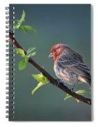 Song Bird In Spring Spiral Notebook