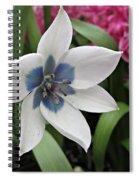 Spring Star Spiral Notebook