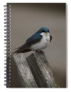 Spring Swallow Spiral Notebook