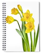 Spring Yellow Daffodils Spiral Notebook