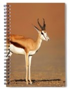 Springbok On Sandy Desert Plains Spiral Notebook