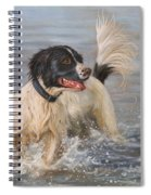 Springer Spaniel Spiral Notebook