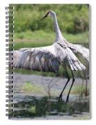 Springing Sandhill Crane Spiral Notebook
