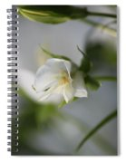 Spring's Late Bloom Spiral Notebook