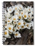 Springtime Abundance - A Bouquet Of Pure White Crocuses Spiral Notebook