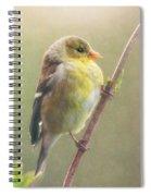 Springtime Goldfinch Spiral Notebook