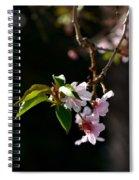 Springtime In Napa Ca Spiral Notebook