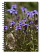 Springtime Tiny Bluet Wildflowers - Houstonia Pusilla Spiral Notebook