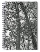Springtime Woods - New Jesey Pine Barrens - Black And White Spiral Notebook